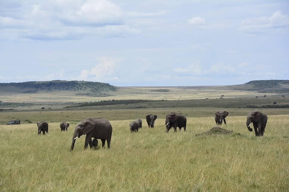 kenya-safari-travel